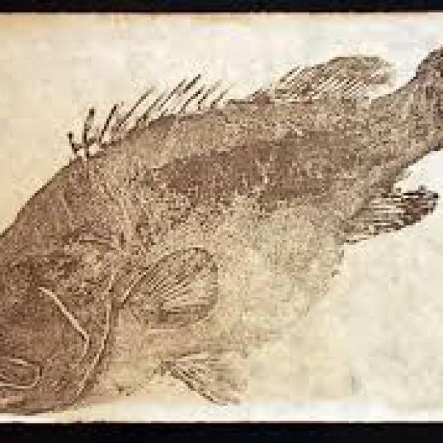 Gyotaku Fish Printing Workshop