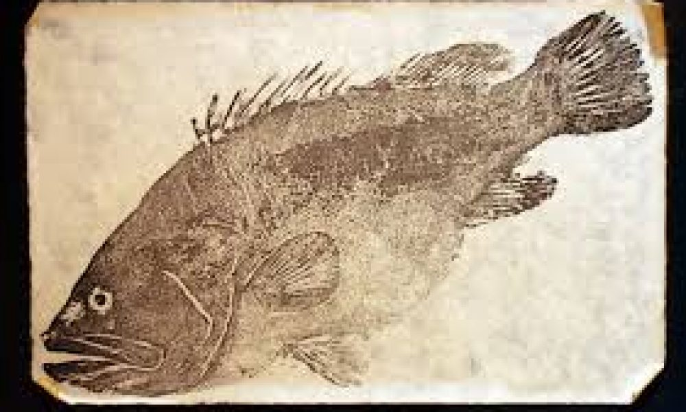 Gyotaku Fish Printing Workshop